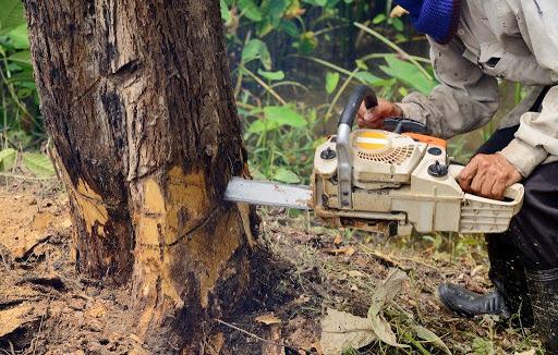 Tree Service Mesa AZ