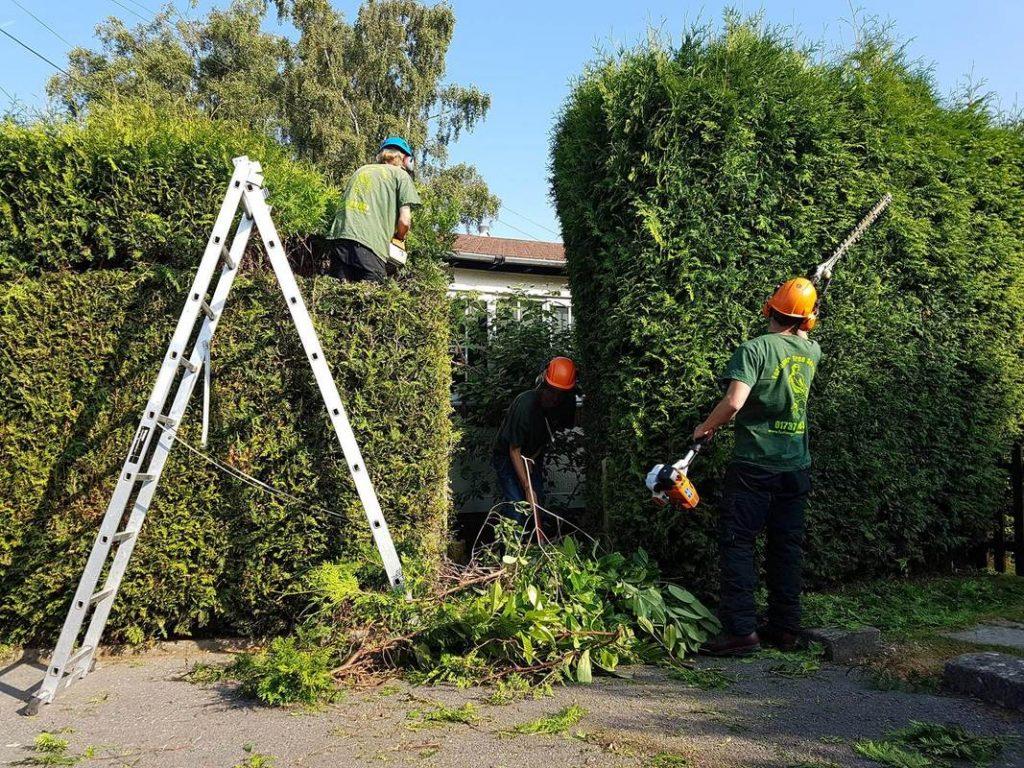 Tree Surgeons Ulverston